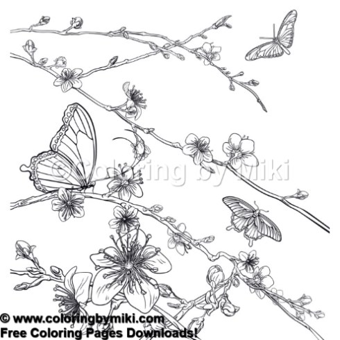 Japanese Flowers Sakura With Butterfly Coloring Page 947 Coloring