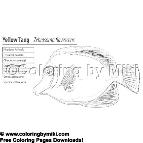 yellow tang coloring pages - photo#24