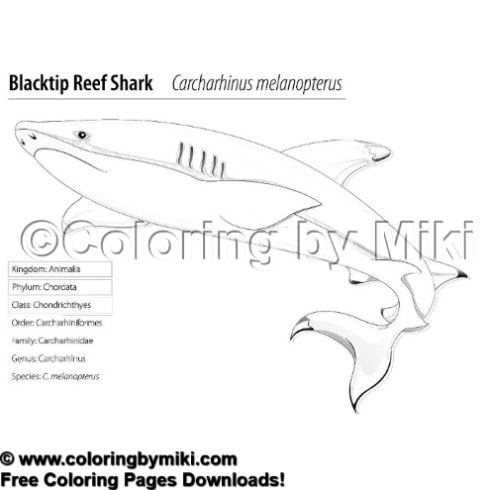 Classified Animals Blacktip Reef Shark Coloring Page #2170 ...